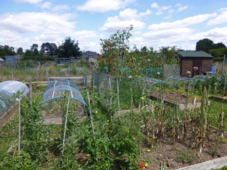Shirrell Heath allotments